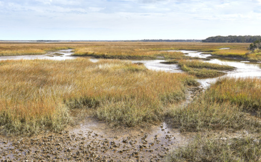 A study by the National Academy of Sciences reveals salt marsh provides an average of $695,000 per square mile a year in protective value to Southeast communities and military installations from storm-surge flooding. (Adobe Stock)