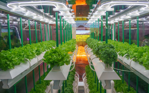 In the United States, hydroponic food production is estimated at $555 million a year, with a projected annual growth of more than 3% over the next decade. (Adobe Stock)<br />