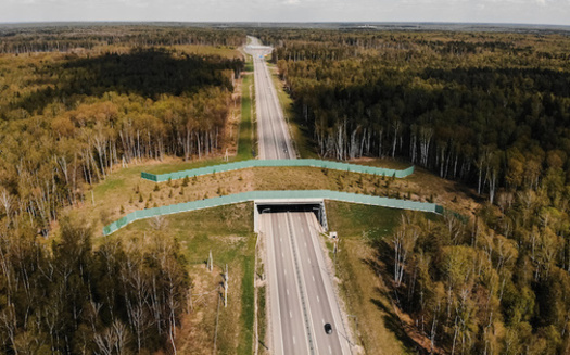 Wildlife crossings can help reduce animal-vehicle collisions, which cause more than 200 human fatalities and more than 26,000 injuries each year. (Adobe Stock)