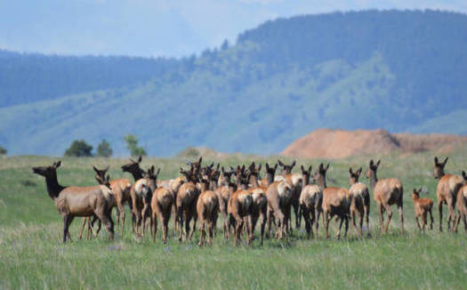 Hunting, fishing and wildlife viewing contributes $5 billion in economic activity each year in Colorado. (Ryan Moehring/USFWS)