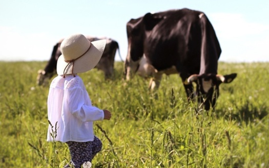 OEFFA's 2021 Sustainable Food and Farm Tour will feature an organic dairy pasture walk. (Adobe Stock)