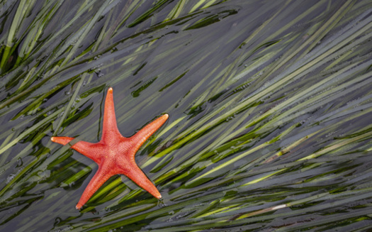 A new report looks eelgrass restoration projects on the West Coast, including 14 in Washington state. (Danita Delimont/Adobe Stock)