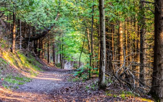 Michigan has 103 state parks that span nearly 300,000 acres. (Kyle Stopczynski/Adobe Stock)