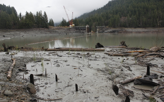The Lower Elwha Klallam Tribe is helping plant life come back to areas near the former site of the Elwha River Dam. (Mike McHenry)