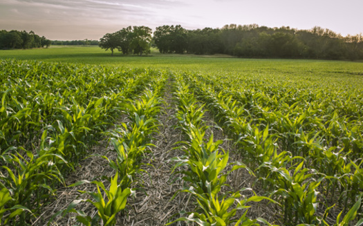 No-till farming, which involves growing crops without disrupting the soil, is considered a hallmark of conservation in agriculture. (Adobe Stock)