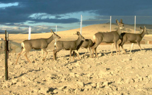 Wildlife overpasses such as this one help mule deer on their migration, which can be up to 100 miles long. (Nevada Department of Wildlife)