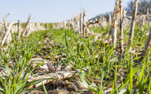 As Midwestern farmers deal with more unpredictable weather patterns, they're urged to adopt practices such as cover cropping to make their land more resilient to flooding and other events. (Adobe Stock)