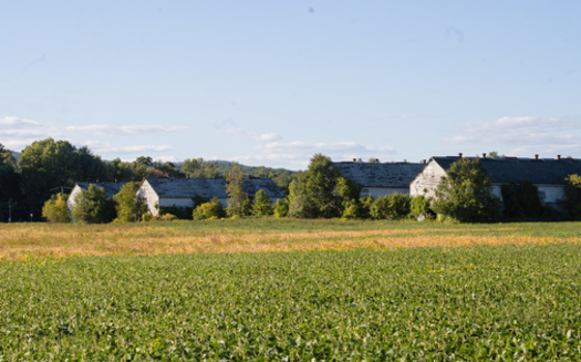 The town of Simsbury plans to preserve the remaining tobacco barns on the Meadowood farmland, some of which have been lost to solar-farm development. (Kesha Lambert)