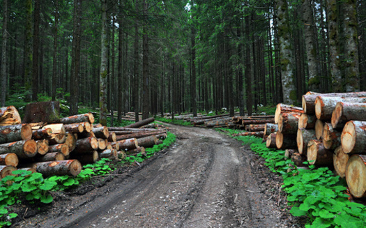 The planet lost an area of forest larger than the United Kingdom in 2020, according to research by the University of Maryland. (Adobe Stock)