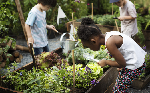 Colorado students are learning science, reading, history and more as they participate in Farm to School programs. (Adobe Stock)