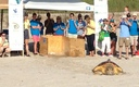 "PHOTO: Loggerhead sea turtles will be released this weekend at the ""Tour de Turtles,"" with satellite transmitters to track their travels around Florida's coast. Photo courtesy Sea Turtle Conservancy."