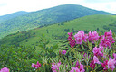 PHOTO: The Land and Water Conservation Fund has helped fund more than 900 North Carolina conservation and recreation projects, including protecting land near Roan Mountain in western North Carolina. Photo courtesy Southern Appalachian Highlands Conservancy