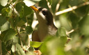 PHOTO: More than 500,000 acres of public land in New Mexico and other western states could receive federal protection as prime habitat for the yellow-billed cuckoo, a bird being considered for endangered species protection. Photo credit: Lower Colorado River Multi-Species Conservation Program.
