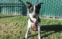 """PHOTO: Dogs can be adopted for as little as $20 at the Nevada Humane Society during October, which is """"Adopt A Shelter Dog Month."""" Photo courtesy of San Bernardino County Dept. of Public Health."""