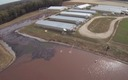 Photo: Devries captured images like this one with his camera equipped drone, which flew over several North Carolina pig farms which supply hogs to Smithfield. Photo courtesy: Devries