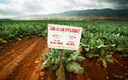 Agricultural pesticides and their effects on farm workers are among the reasons a new poll shows Latinos care deeply about environmental issues. Photo credit: pgiam/iStockphoto.com.