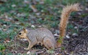 PHOTO: Plague can spread to humans from rodents like squirrels, and can be fatal. The disease has claimed one life in New Mexico this summer and two in Colorado, and has closed a popular campground at Yosemite National Park in California. Photo credit: Texas Parks and Wildlife Department.
