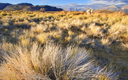 The federal government has announced new management strategies for sagebrush country from California to Montana. Credit: bigwest1/iStock