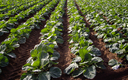 Conference attendees will learn about saving the planet through soil this weekend in Billings. Credit: belfasteileen/iStock