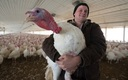 Despite losing more than 9 percent of the state's annual turkey population to avian flu this year, Iowans will find an abundant supply for holiday dinners. Courtesy: National Turkey Federation