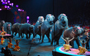 More than a dozen circuses continue to use elephants, but Ringling Brothers has now ended the practice. (Laura Bittner/Flickr)