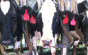 A screenshot from a video made at the Bettencourt Dairy in Hansen, which sparked Idaho's ag-gag law. (Mercy for Animals)