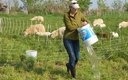 PHOTO: A new rule clarifying where the Clean Water Act applies seems to be drawing a lot of support from farmers like Steph Larsen, seen here watering her sheep. Photo courtesy of Steph Larsen.