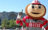 PHOTO: A new report finds climate change is causing Ohio's beloved buckeye to move northward, and even into Wolverine territory. Photo credit:OSU.