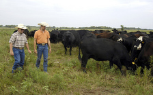 R-CALF represents cattle and sheep producers in 47 states. (Bob Nichols/U.S. Department of Agriculture)