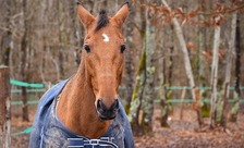 Kentucky passed a law in 2017 that allows courts to order people convicted of cruelty involving horses to lose ownership rights. (christels/Pixabay)