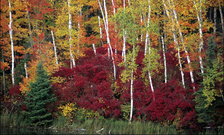 Chippewa National Forest is one of many recreational sites in Minnesota that has benefited from the Land and Water Conservation Fund set to expire in six weeks without action from Congress. (health.state.mn.us)