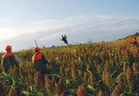 Some Iowans see conservation funding in the farm bill as a driver for the state's rural economy. (pheasantsforever.org)