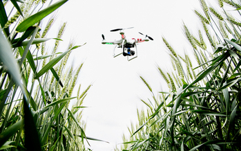 PHOTO: Illinoia researchers say they're saving valuable time by using drones to monitor crops in their fields. Photo credit: L. Brian Stauffer/University of Illinois.