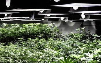 PHOTO: Colorado continues to work with the cannabis industry to make sure proper rules and safety guidelines are in place. Photo courtesy of the Cannabis Business Alliance.