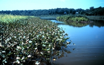 PHOTO: B.V. Wine from California's Napa Valley is donating a portion of profits from sales in Maryland, Delaware and Washington, D.C. to the nonprofit Chesapeake Bay Trust. The nonprofit funds about $5 million in projects and programs to improve the bay each year. Photo credit: NOAA.
