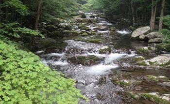 PHOTO: Conservationists are concerned about the potential impact of a huge natural-gas pipeline on parts of the Monongahela and George Washington national forests, such as Laurel Creek in the GW. Photo courtesy of Wild Virginia.
