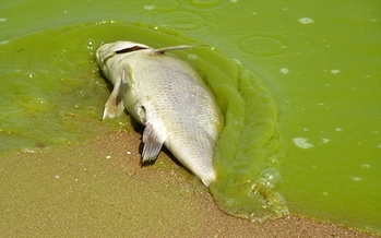 PHOTO: Some experts say harmful algae blooms in Lake Erie are spurred by climate change and some outdoor groups in Ohio are supporting the EPA's efforts to reduce carbon pollution linked to climate change. Photo credit: Tom Archer/Flickr.