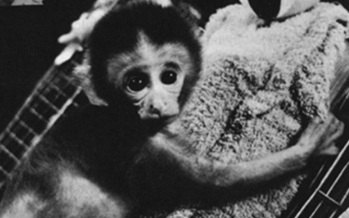 PHOTO: The Animal Legal Defense Fund (ALDF) has filed a lawsuit against the University of Wisconsin�Madison over what the group claims is lack of transparency regarding its planned testing of baby primates. Photo courtesy of the Animal Legal Defense Fund.