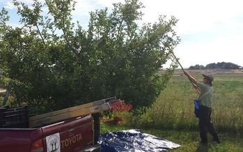 Photo: Branch Out Cider collects apples from yards, gardens and acreages around Fort Collins to make their award-winning cider. Photo courtesy: Branch Out Cider