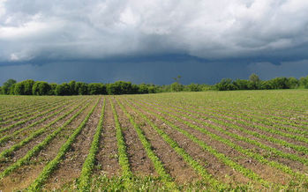 PHOTO: The nation's crop insurance program has gone from safety net to a farm policy disaster, according to a new series of white papers from the Land Stewardship Project. Photo credit: Paul Schultz/Flickr.