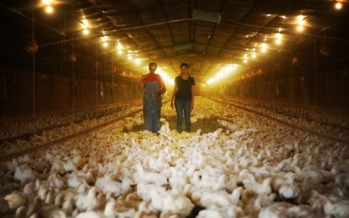 Photo: Farmer Craig Watts and Leah Garces with the group Compassion in World Farming survey Watts' chickens he raises as a contractor for Perdue Farms. Photo courtesy: Compassion in World Farming