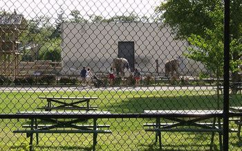 PHOTO: Ruth and Emily, elephants at New Bedford's Buttonwood Park Zoo in this 2006 photo, are at the center of continuing claims of abuse leveled by an animal-rights organization. Photo credit: LGagnon/Wikimedia Commons