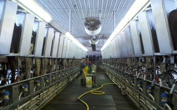 PHOTO: Silencing or deterring whistle-blowers of animal abuses at factory farms is the intent of a bill being considered by New Mexico lawmakers, that's according to Eleanor Bravo with Food and Water Watch. Photo courtesy U.S. Department of Agriculture.