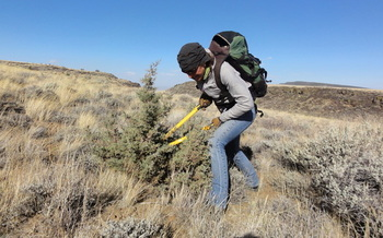 PHOTO: Sara Domek of Backcountry Hunters and Anglers helps chop down juniper on Hart Mountain in Lake County. Oregon has managed to clear an estimated 68 percent of the invasive conifers, which crowd out native sagebrush and threaten sage-grouse habitat. Photo credit: Nick Dobric, Oregon Backcountry Hunters and Anglers.