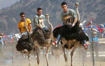 PHOTO: Cruel or fun? Protesters at this weekend's annual Chandler Chamber Ostrich Festival say they believe the ostrich races are harmful to the animals and dangerous for human riders. Photo courtesy Chandler Chamber of Commerce.