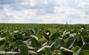 PHOTO: The EPA is being taken to court over its approval of an herbicide for use on genetically-engineered soybean and corn crops in North Dakota and 14 other states. The plaintiffs say Enlist Duo poses a threat to human health and endangered species. Photo credit: Jason Ippolito/Flickr.
