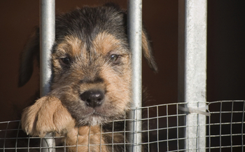 PHOTO: There is a rising number of pet thefts across the nation.