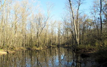PHOTO: Wetlands in North Carolina will see greater protection under the new clean water rules issued by the EPA. Photo credit: bobistraveling/Wikimedia Commons