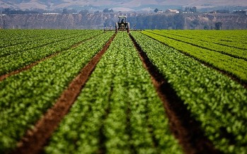 The EPA says it plans to ban agricultural use of the pesticide chlorpyrifos, commonly used on some California crops. Credit: Chris Jordan-Bloch/Earthjustice.
