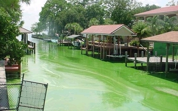 An algae bloom on Christopher Creek exemplifies Florida's water quality issues, even as the state's attorney general is choosing to fight the EPA over clean water rules. Credit: Earthjustice.